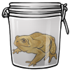 Yellow Toad in a Jar